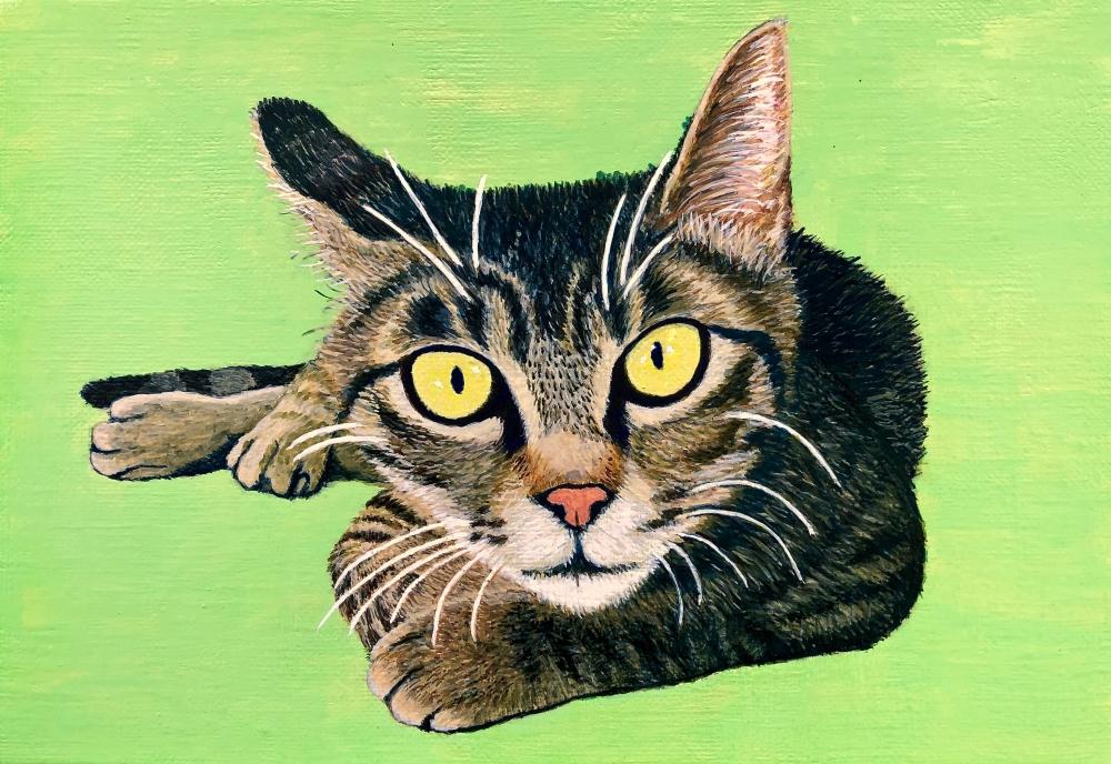 exid983wid939 / Cat 14