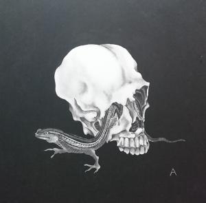 exid35328wid33955 / 髑髏と蜥蜴