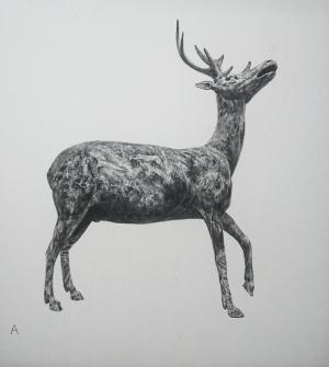 exid38824wid36637 / カエサルの牡鹿