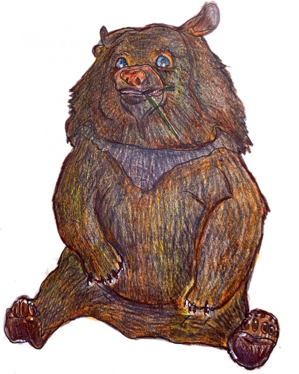 exid594wid568 / Brown bear
