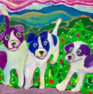 exid583wid558 / Jack Russell Terrier