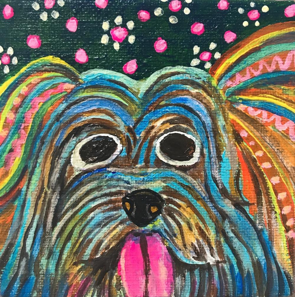 exid588wid563 / Yorkshire Terrier
