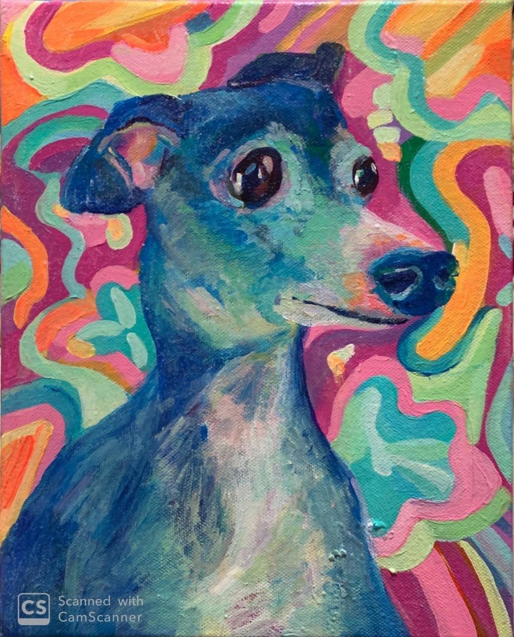 exid591wid565 / Italian Greyhound