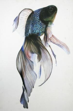exid1374wid1336 / Fish