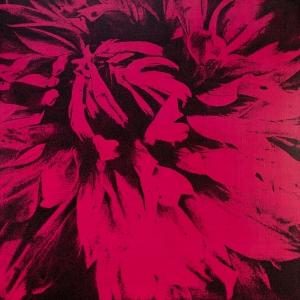 exid1551wid1595 / No.1 flower(dahlia) pink