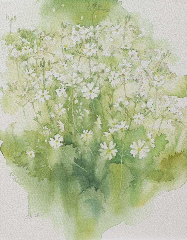 福村 飛鳥/Fairy primrose/exid39467wid37280