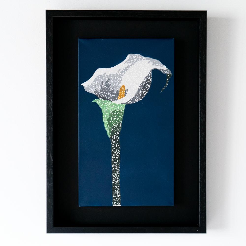 exid274wid206 / Calla lily