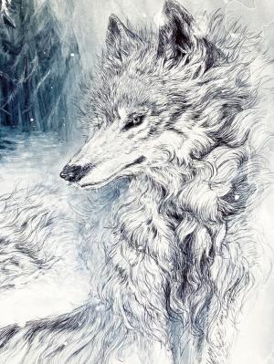 exid38335wid35240 / 雪の森